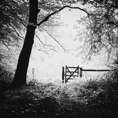 190430 staffhurst woods 004 Edit