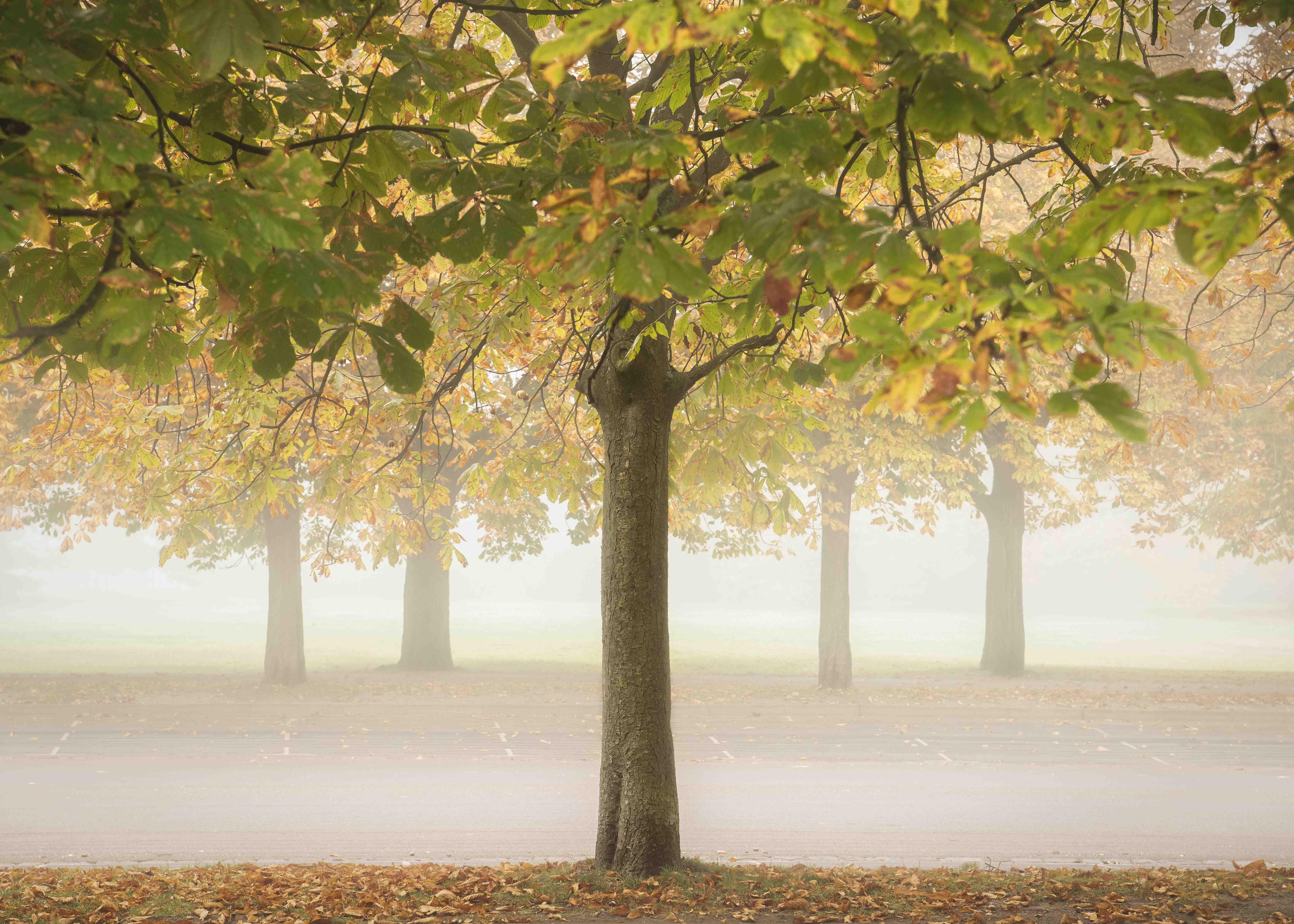 Terry Gibbins Autumn crunch