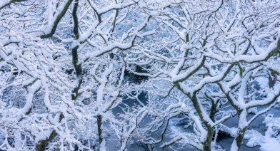 Snow Clad Woodland